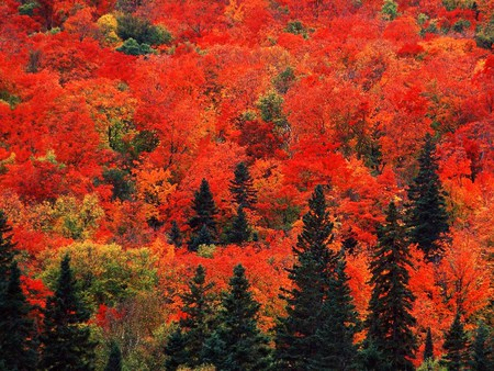 New England Fall Phone Wallpaper Autumn In Canada Forests Amp Nature Background Wallpapers