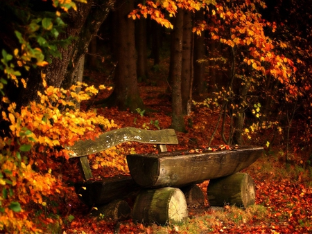 Cat In Fall Wallpaper Background Autumn Forests Amp Nature Background Wallpapers On Desktop