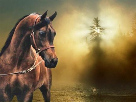 4k Laptop Wallpaper Fall Forest Bay Arabian Horse F2 Horses Amp Animals Background