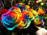 Colorful Roses - Flowers & Nature Background Wallpapers on ...