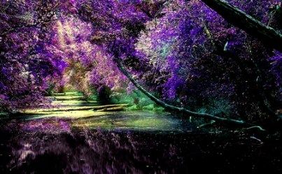 purple forest nature background wallpapers comments desktop trees