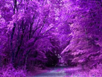 purple forest nature trees background fantasy desktop wallpapers path pretty xcitefun abstract desktopnexus