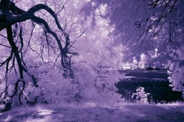 purple nature fantasy background desktop wallpapers trees desktopnexus