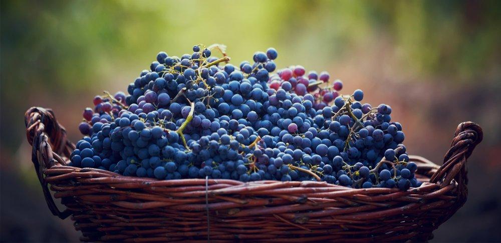 Vin : la production française revue à la hausse par le ministère