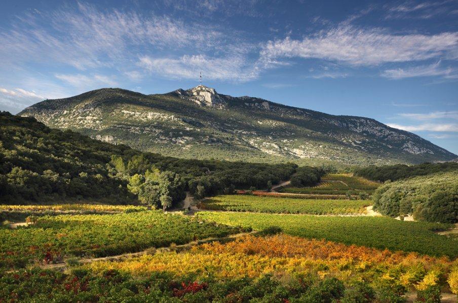 Avec Tous en Terrasses du Larzac les Montpellirains  la rencontre dun vignoble en vogue