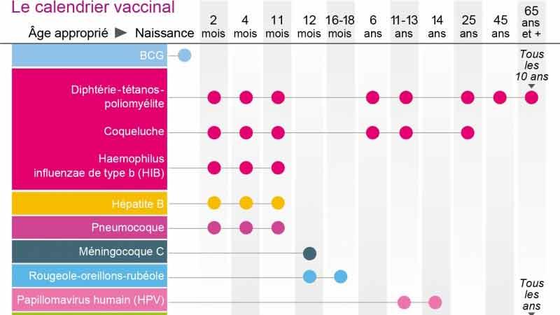 vaccin bébé calendrier