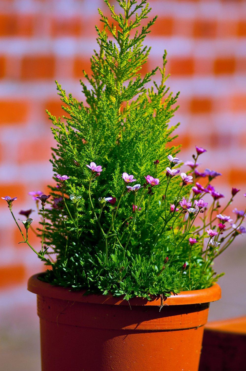 Planter un arbuste en pot  Marie Claire
