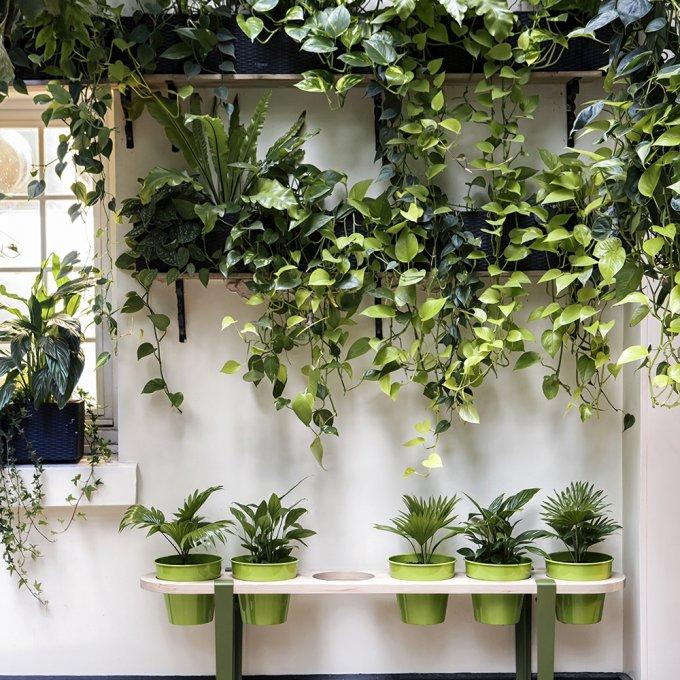 banc Tiptoe plantes vertes