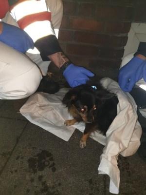 FW-BOT: Wohnungsbrand in Bottrop/Hund aus brennender Wohnung gerettet