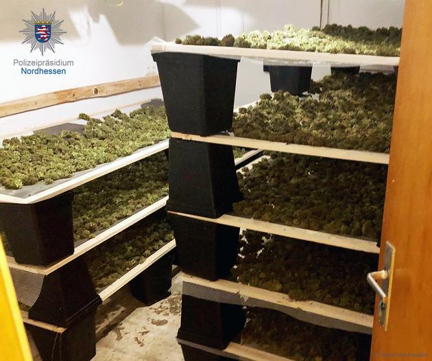 POL-KS: Cannabis-Plantage in Waldeck ausgehoben: Drei Tatverdächtige festgenommen