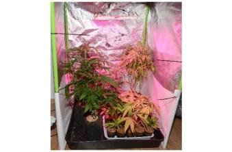 POL-WHV: Cannabisplantage in Wilhelmshaven entdeckt - Polizei beschlagnahmt 55 Pflanzen (mit Bildern)
