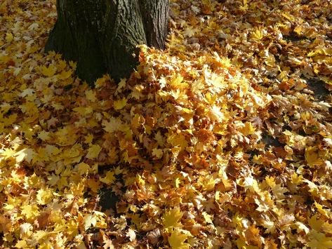 Kostbares Herbstlaub / Städtisches Grün vor Wintereinbruch schützen / Tipps des Baumschulers helfen über den Winter