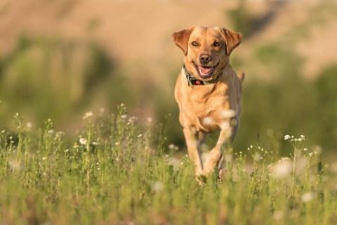Zeckenschutz ist keine Frage der Saison / Auch wenn Zecken mit steigenden Temperaturen besonders aktiv werden, müssen Hunde- und Katzenbesitzer umdenken