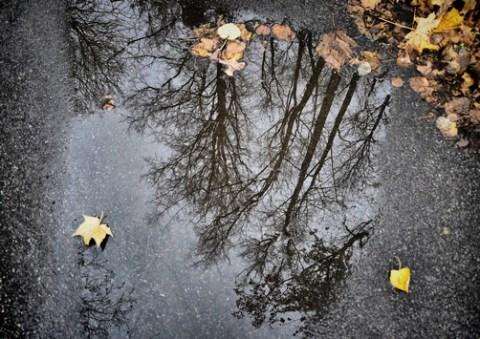 Starkregen mit kluger Gartengestaltung begegnen / Oberflächenversiegelung gefährdet Haus und Hof