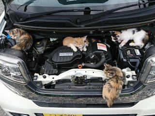自動車のエンジンルームでくつろぐねこを発見! 「ねこバンバン」を忘れずに!!
