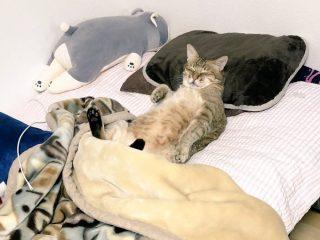 帰宅したら我が物顔の猫さんがベッドで爆睡!くつろぐ様子がかわいい