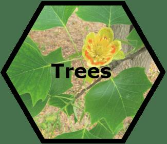 cache valley nursery trees