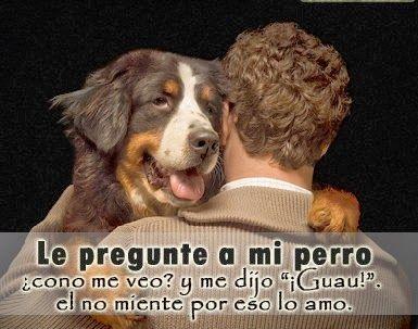 amo-mi-perro