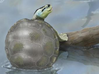un-grupo-cientificos-espanoles-descubre-portugal-una-tortuga-jurasica