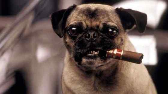 12 Raças de Cachorros Pequenos e Fofos