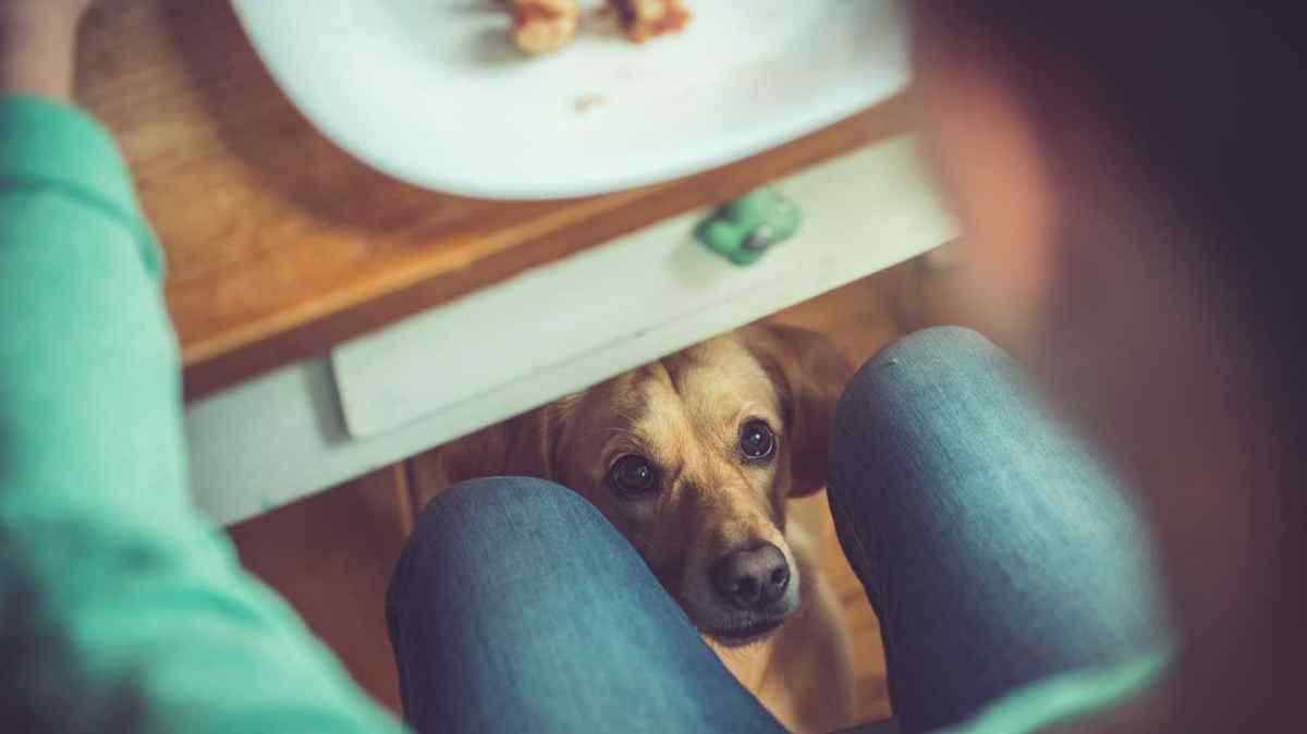 o que cachorro pode comer além da ração