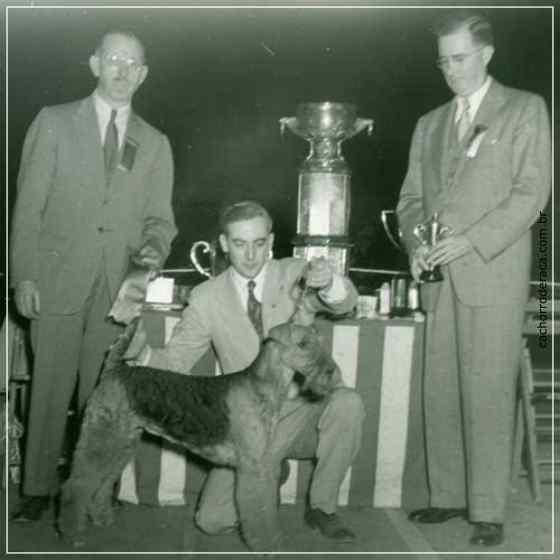 Airedale Terrier- história da raça