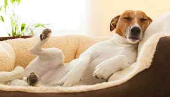 Como fazer o cachorro parar de peidar?
