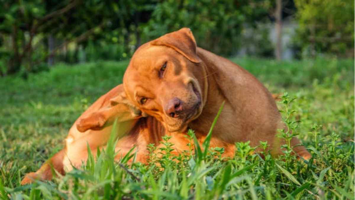 Alergia em Cachorro
