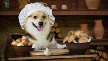cachorro pode comer alho