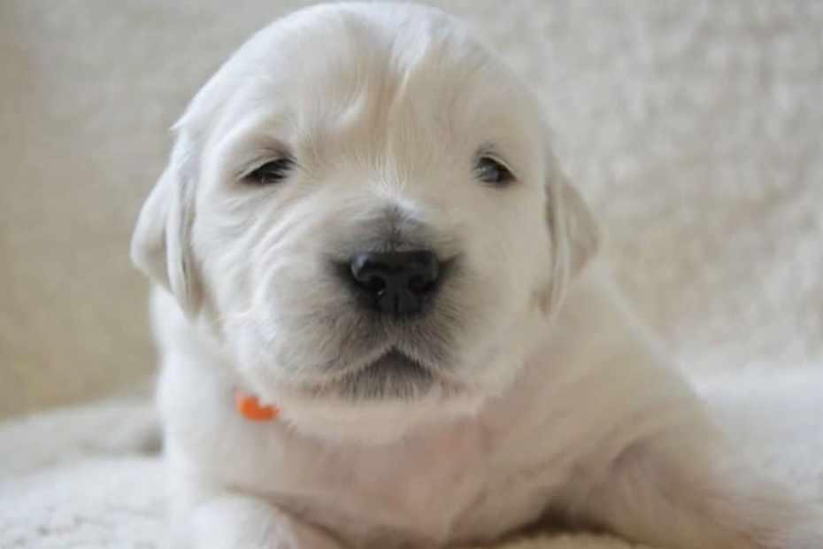 herpes canina