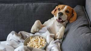 cachorro pode comer pipoca