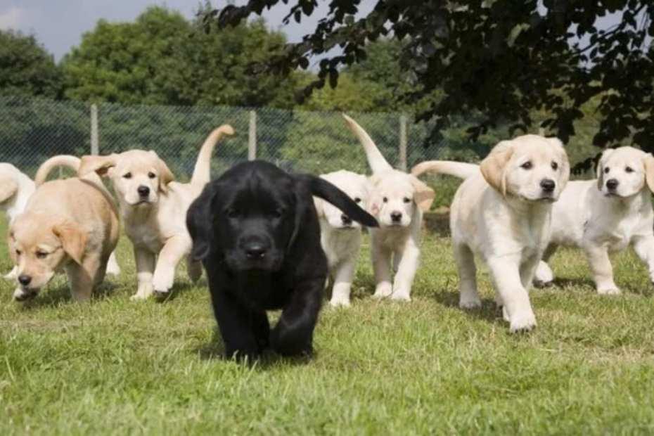 105 nomes de cachorro preto