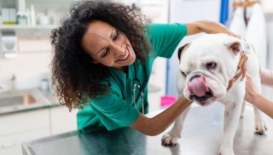 acne canina tratamento