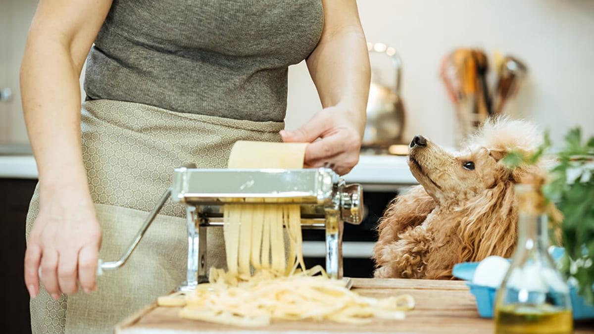 cachorro pode comer macarrão