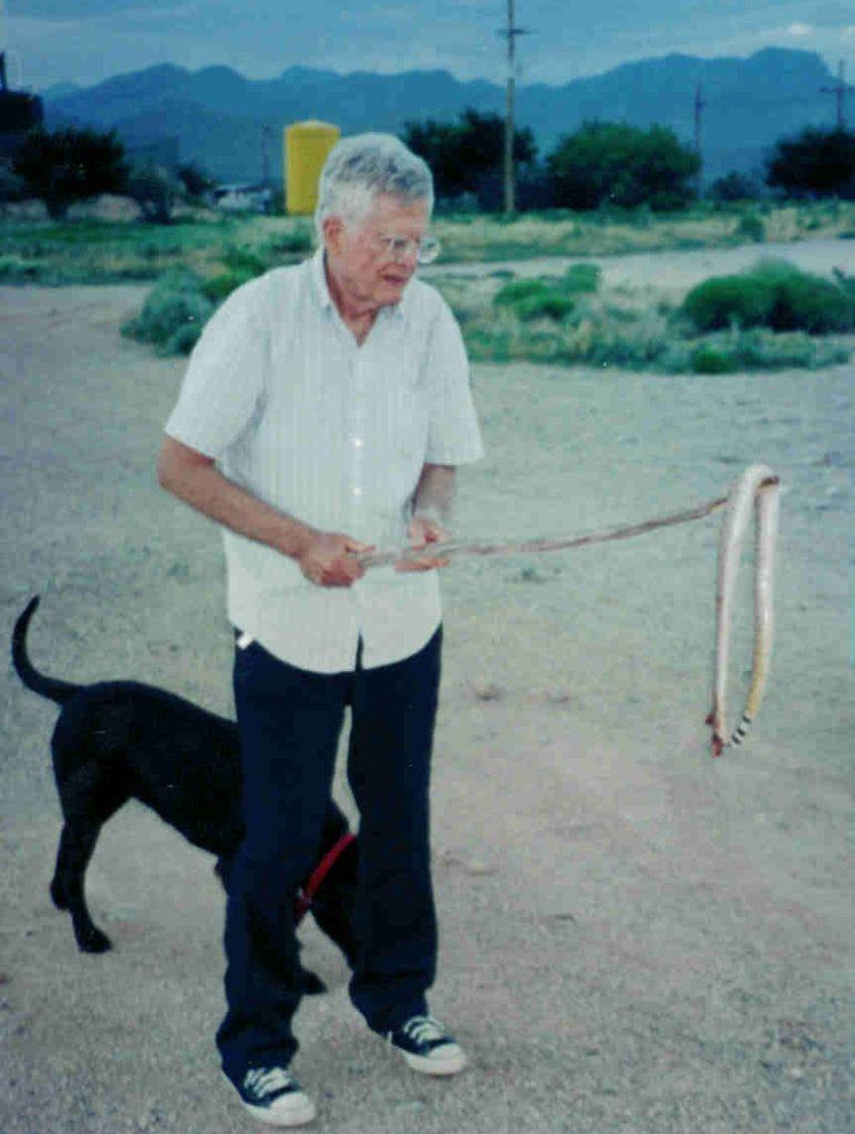 dead rattlesnake