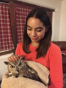 Holding wild owl