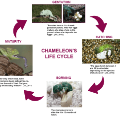 Chameleon Life Cycle Diagram 1995 Ford Ranger Fuse Cacoo 39s