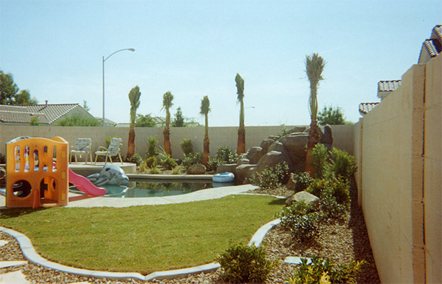 We Dont Plant Certain Trees in Las Vegas Landscaping