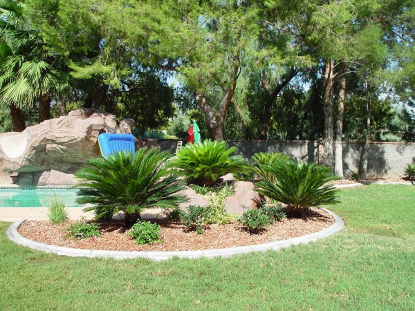 palm trees flagstone & additional