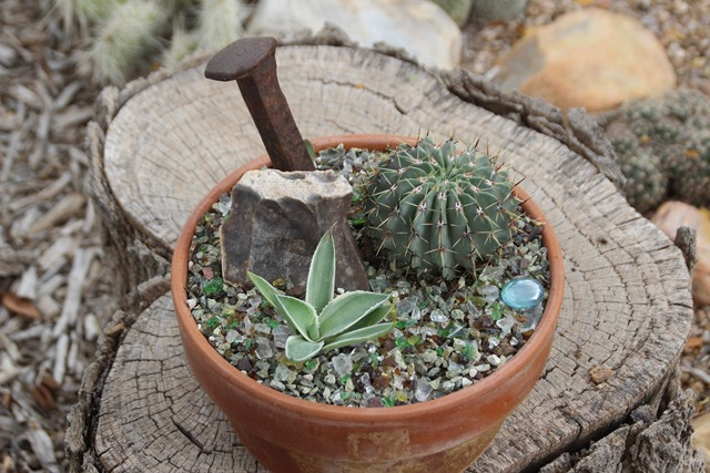 Decorate Your Dish Garden With Railroad Spikes Cactus Are Cool