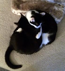 gatos sociales