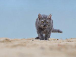 cat-665142_960_720