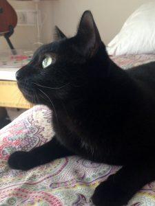 Max y cada gato en su casa