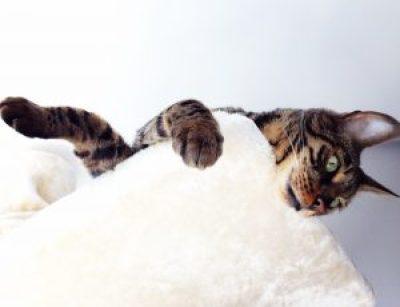 Asesoramiento en comportamiento de los gatos Cada gato en su casa