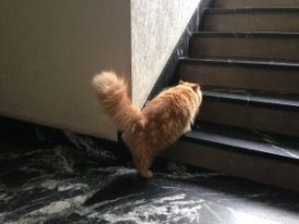 gato de paseo por el portal