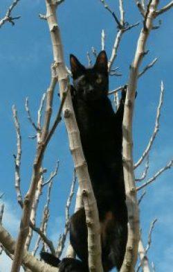 gato cazador arborícola