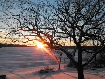 Wisconsin winter sunset, winter oak tree