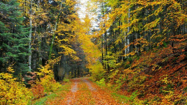 Resultado de imagen de Bosque de Irati Navarra imágenes
