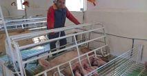 Un propietario de una granja porcina en Vilches.