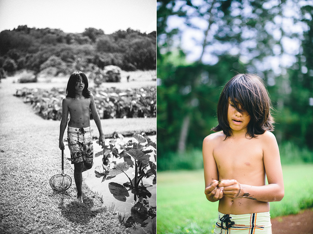 boy works in taro patch on Maui